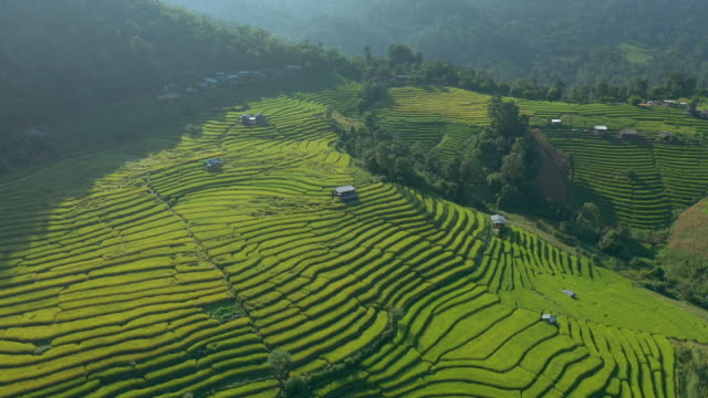Zoom out of rice terrace in the valley Aerial view zoom out of rice terrace in the valley at the morning banaue stock videos & royalty-free footage