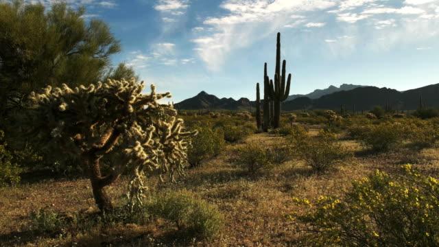 サボテンとアリゾナ州のアジョ ・山のショットを拡大します。 - オコティロサボテン点の映像素材/bロール