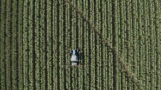 4k zoom out straight down high aerial view of a tractor spraying vegetable crops with pesticide on a large scale vegetable farm - zoom out stock videos & royalty-free footage