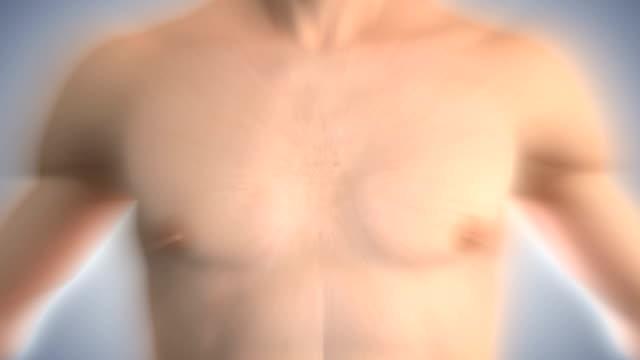 vídeos de stock e filmes b-roll de ampliar para o coração beating.hd - ventrículo do coração