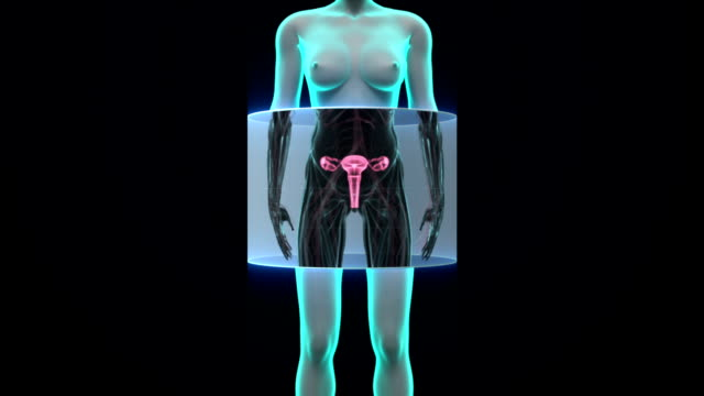 Zooming female body scanning womb, blue X-ray image. video