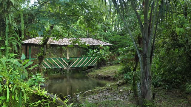 Zooming out on a small bridge or crossing over a stream in a tropical garden showing many beautiful plants and trees