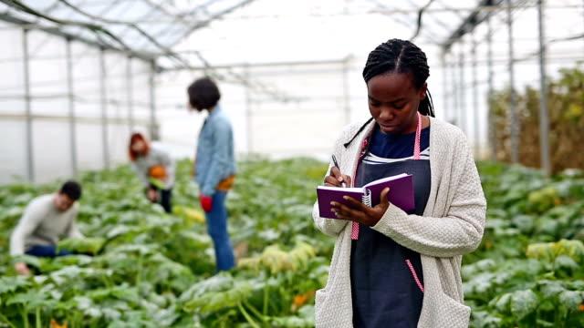 Zucchini harvest in greenhouse video